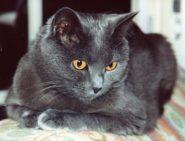 """Poésie : """"Un petit chat gris"""""""
